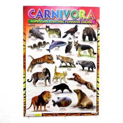 Grosir Poster Dinding Binatang Pemakan Daging