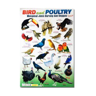 Poster Mengenal Jenis Burung Dan Unggas